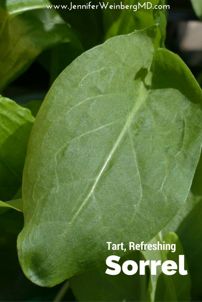 #Sorrel a fresh #healthy #green with a lemony zing! #health #greens #food #veggie #vegan #vegetarain #recipe #farmersmarket #wellness #spring www.JenniferWeinbergMD.com